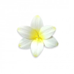 Freesia en pastillage jaune Patisdecor (x2)